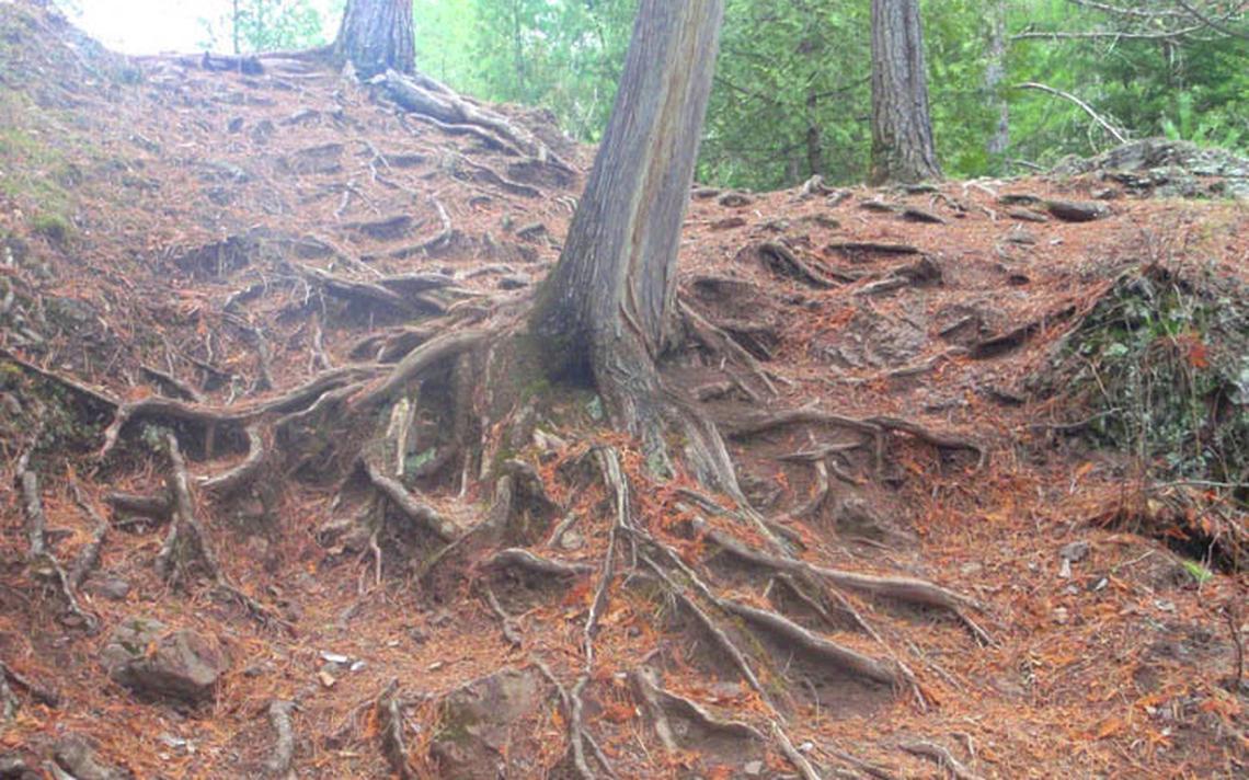plant trees to prevent soil erosion - farmsio